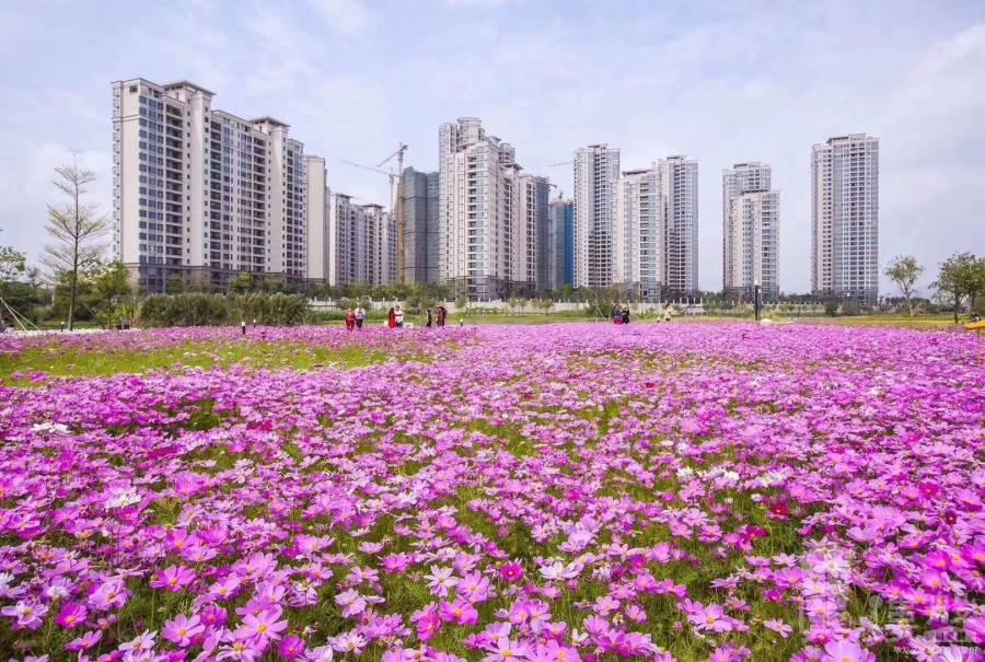 華發峰尚_珠海 首期10萬 大型屋苑 即買即住 香港銀行按揭 (實景航拍)